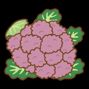 紫のカリフラワーのフリーイラスト Clip art of purple cauliflower