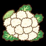 カリフラワーのフリーイラスト Clip art of cauliflower