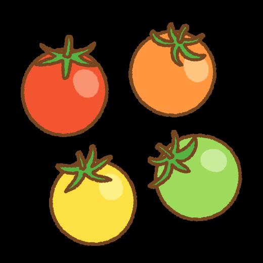 カラープチトマトのイラスト