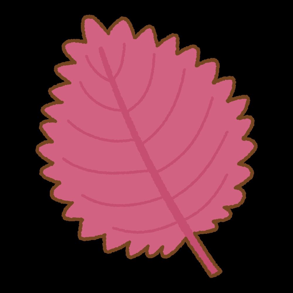 赤紫蘇のフリーイラスト Clip art of akashiso