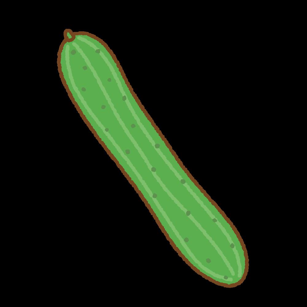 キュウリのフリーイラスト Clip art of cucumber