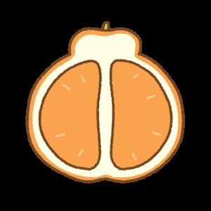 デコポンの断面のフリーイラスト Clip art of dekopon-cut