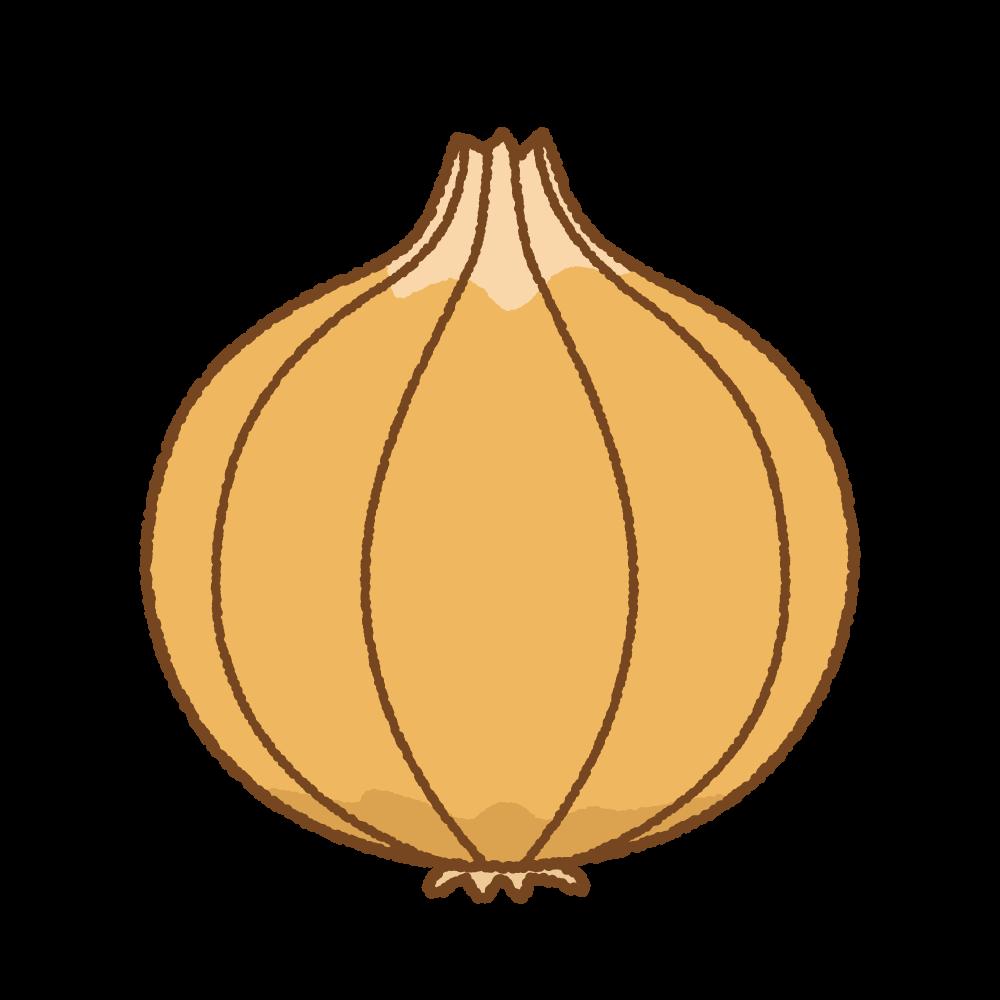 タマネギのフリーイラスト Clip art of onion