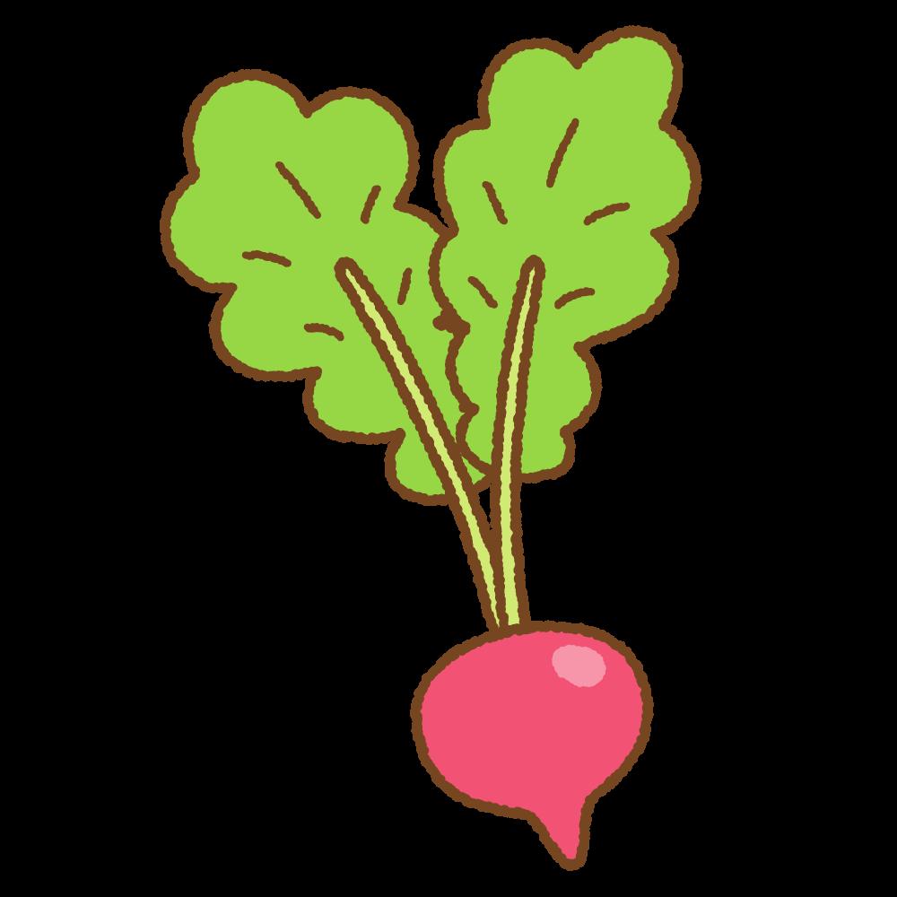 ハツカダイコンのフリーイラスト Clip art of radish