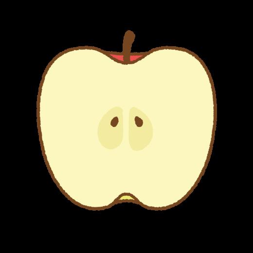 リンゴ(断面)のイラスト