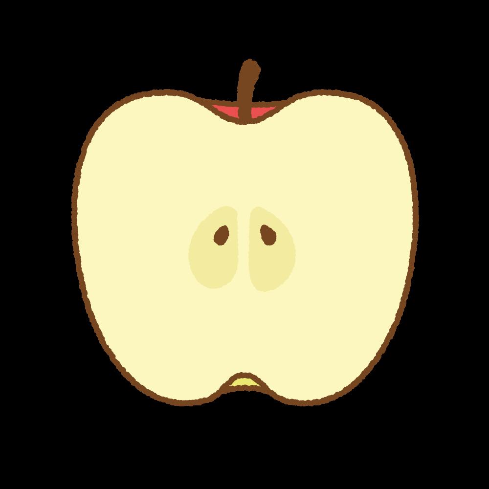 リンゴの断面のフリーイラスト Clip art of apple cut