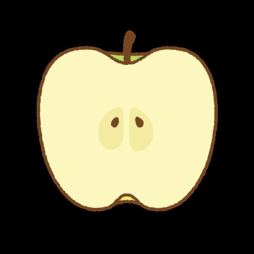 青リンゴの断面のイラスト