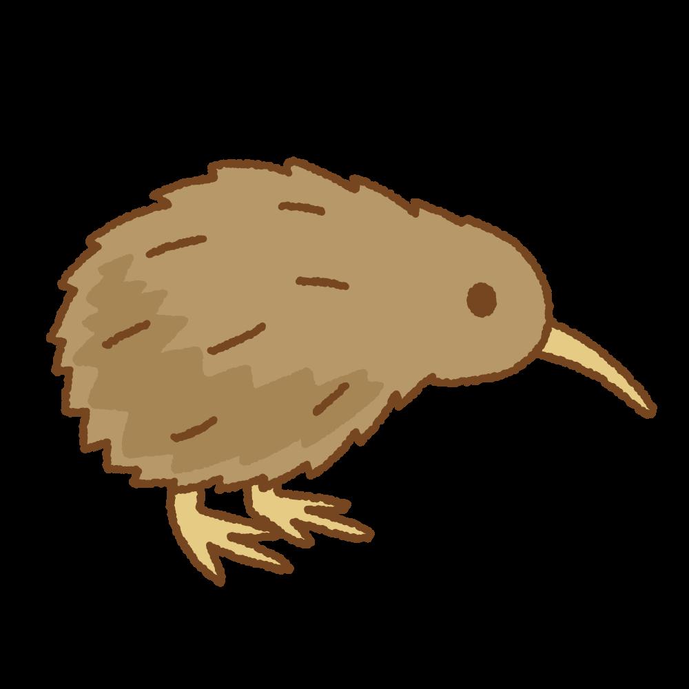 キーウィのフリーイラスト Clip art of kiwi bird