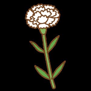 白いカーネーションのフリーイラスト Clip art of white carnation