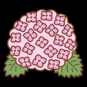 ピンクのアジサイのフリーイラスト Clip art of pink hydrangea