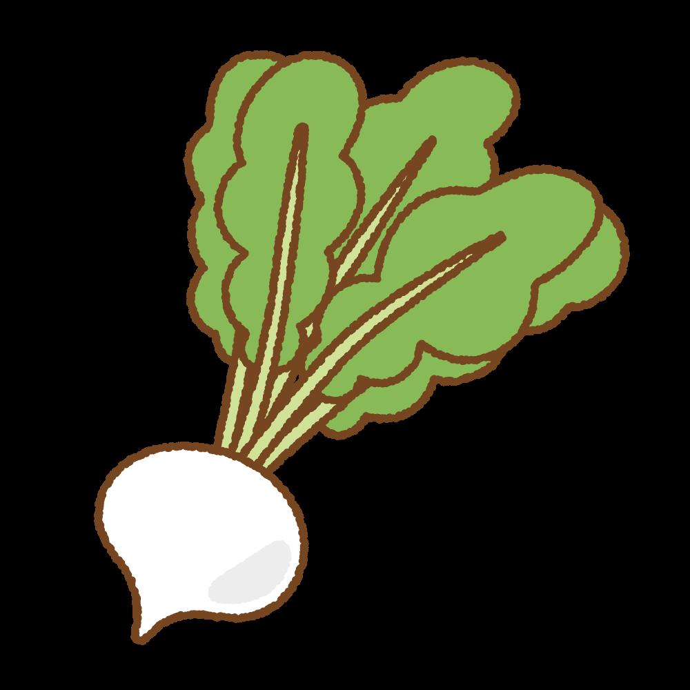 カブのフリーイラスト Clip art of turnip