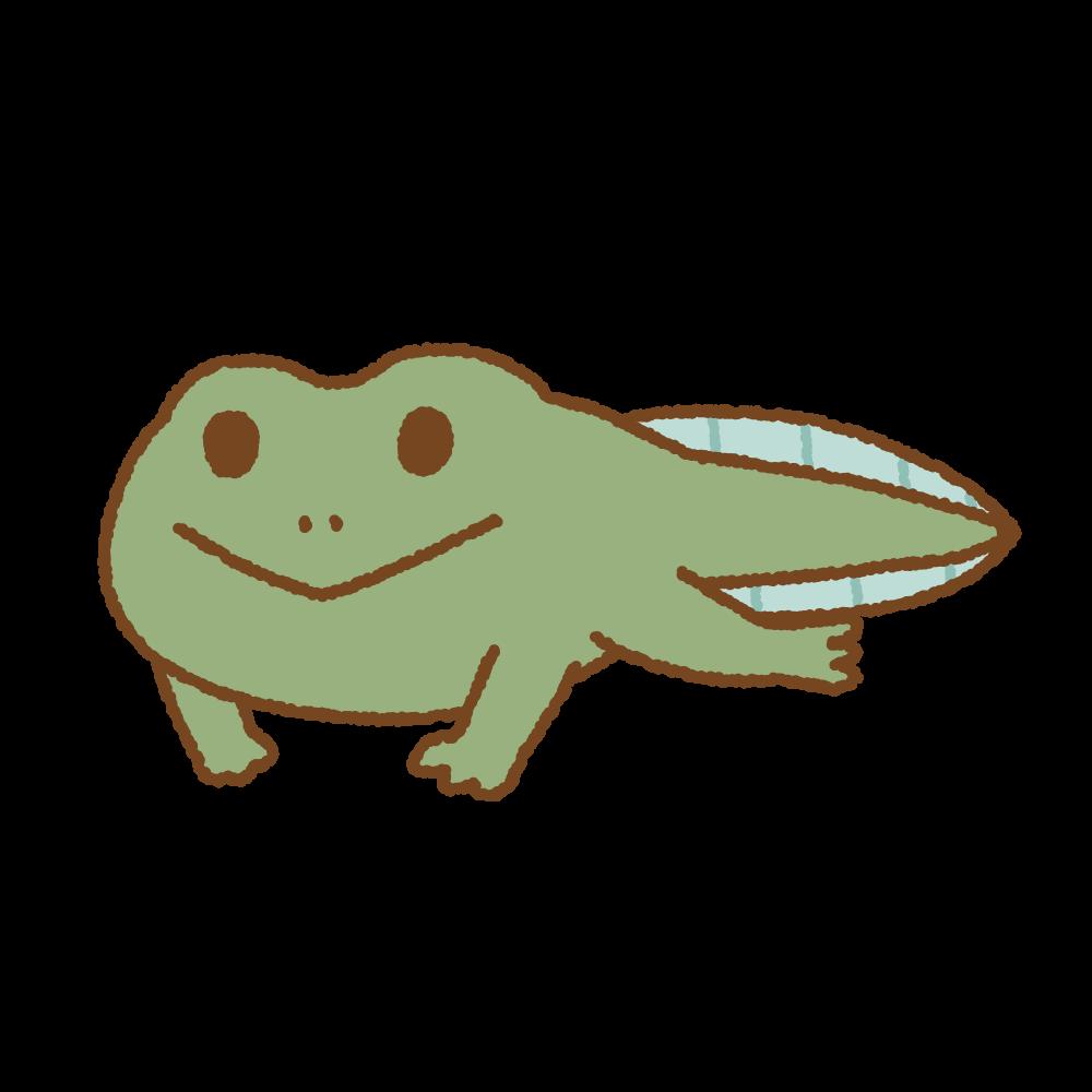 まだ尻尾があるカエルのフリーイラスト Clip art of frog tail