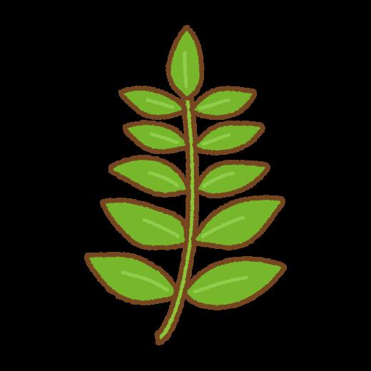 木の芽のイラスト