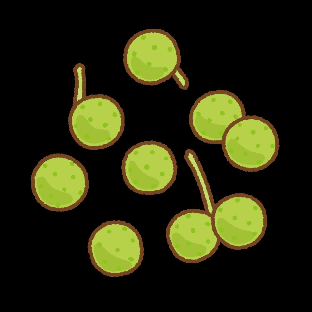 山椒の実のフリーイラスト Clip art of sanshou