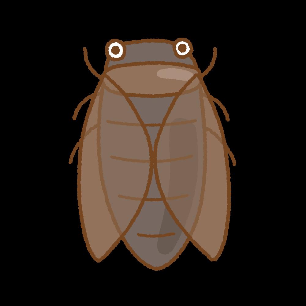 セミのフリーイラスト Clip art of cicada
