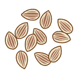 ディルシードのフリーイラスト Clip art of dill seeds