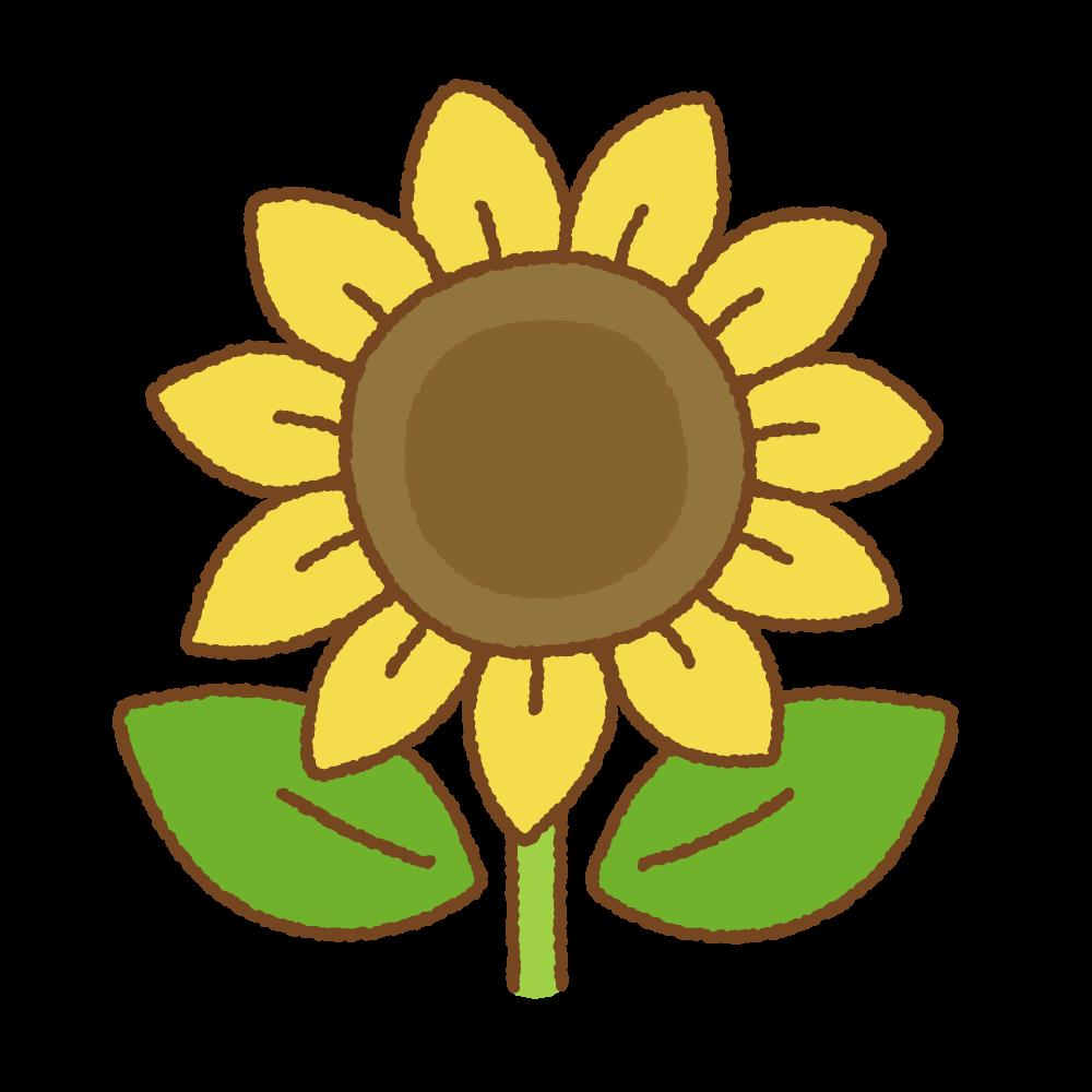 ヒマワリのフリーイラスト Clip art of sunflower