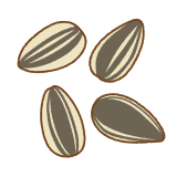 ヒマワリの種のフリーイラスト Clip art of sunflower-seed