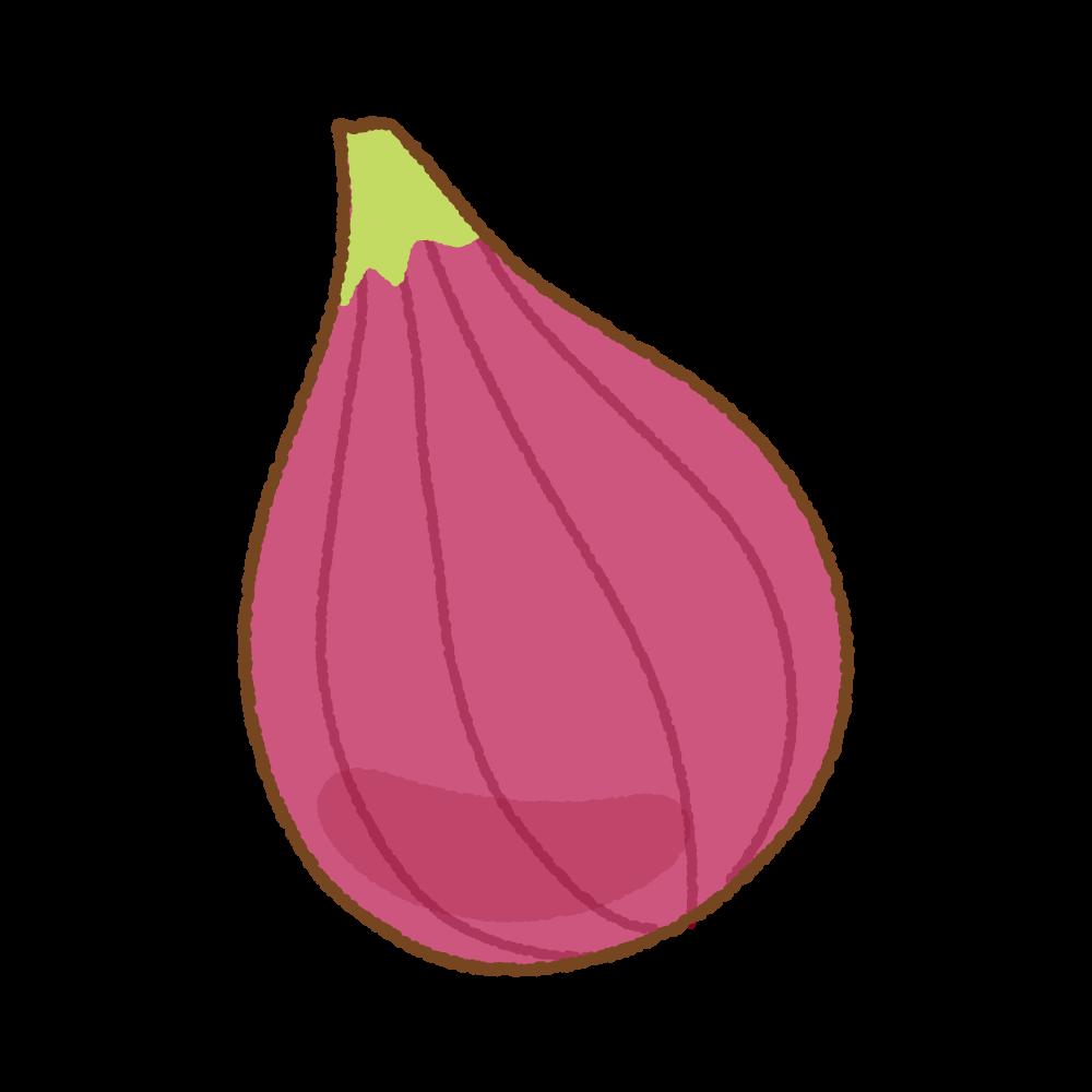 イチジクのフリーイラスト Clip art of fig