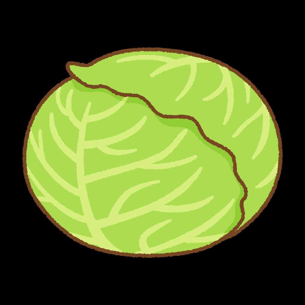 キャベツのフリーイラスト Clip art of cabbage