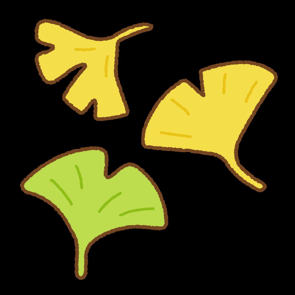 イチョウの葉のフリーイラスト Clip art of ginkgo-leaf