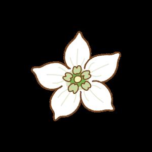 パプリカの花のフリーイラスト Clip art of paprika flower