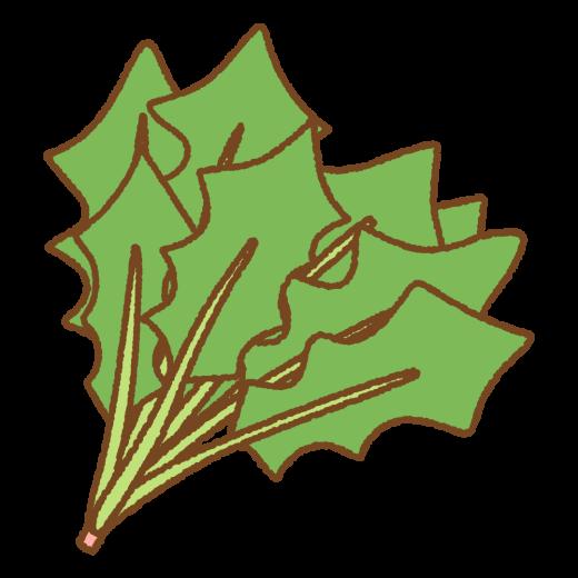 ホウレン草のイラスト