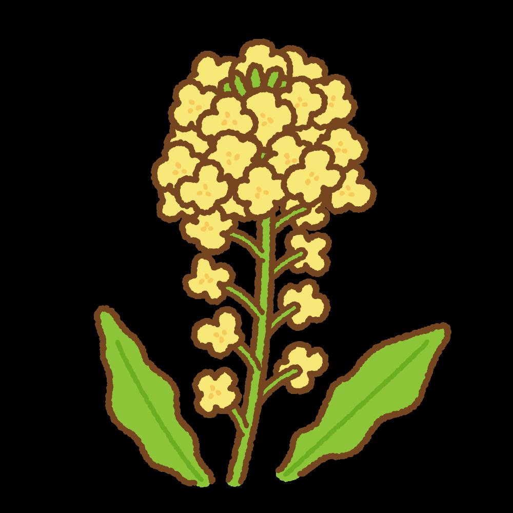 菜の花のフリーイラスト Clip art of canola flower