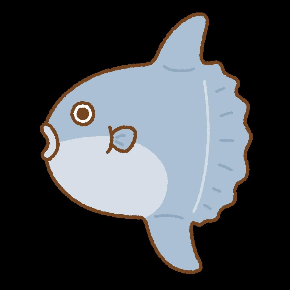 マンボウのフリーイラスト Clip art of sunfish