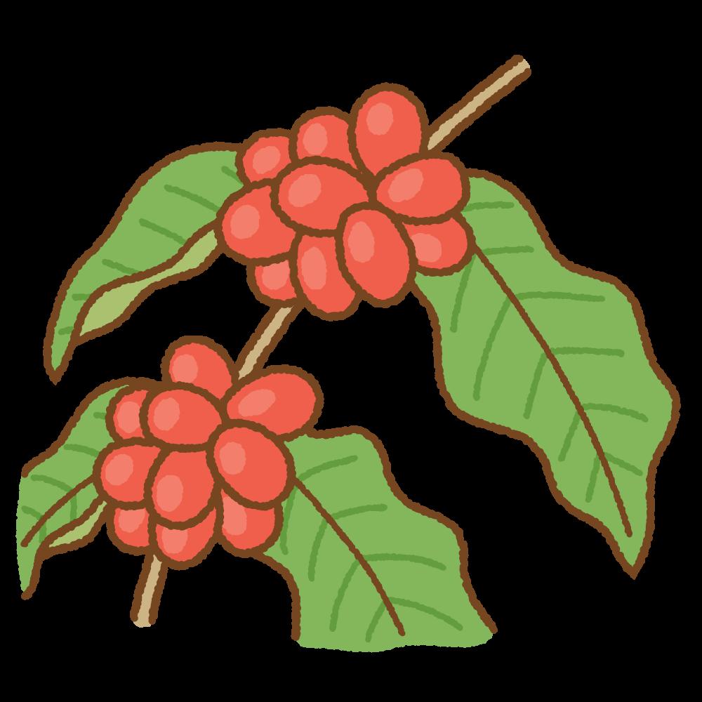 コーヒーの実のフリーイラスト Clip art of coffee fruit