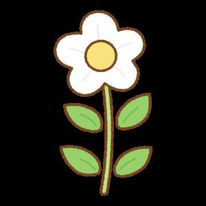 白い花のフリーイラスト Clip art of white flower