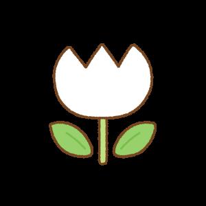 白のチューリップのフリーイラスト Clip art of white tulip