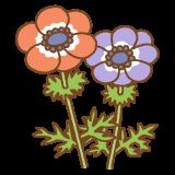 アネモネのフリーイラスト Clip art of anemone