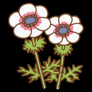 白いアネモネのフリーイラスト Clip art of white anemone