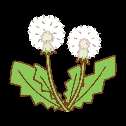 タンポポ(綿毛)のイラスト