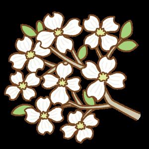白いハナミズキのフリーイラスト Clip art of white dogwood