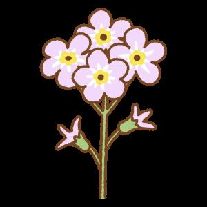 ピンクのワスレナグサのフリーイラスト Clip art of pink forget me not