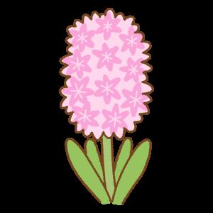 ピンクのヒヤシンスのフリーイラスト Clip art of pink hyacinth
