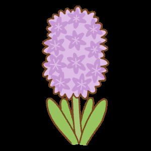 紫のヒヤシンスのフリーイラスト Clip art of purple hyacinth