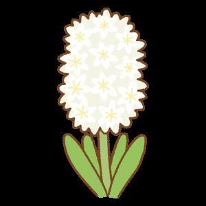 白いヒヤシンスのフリーイラスト Clip art of white hyacinth