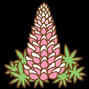 ピンクのルピナスのフリーイラスト Clip art of pink lupinus