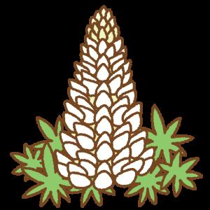 白のルピナスのフリーイラスト Clip art of white lupinus
