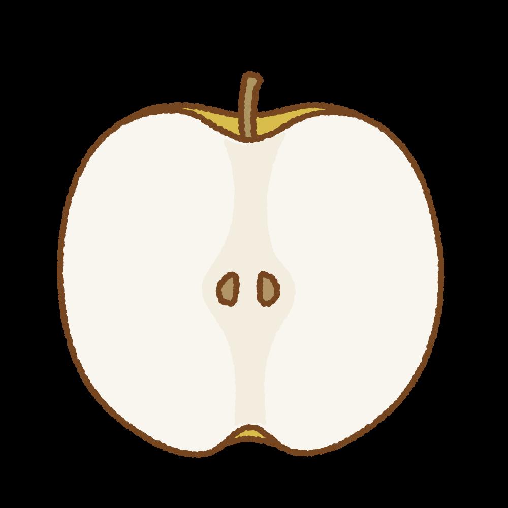 梨の断面のフリーイラスト Clip art of pear cut