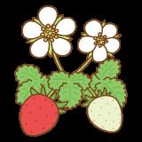 イチゴの花のイラスト
