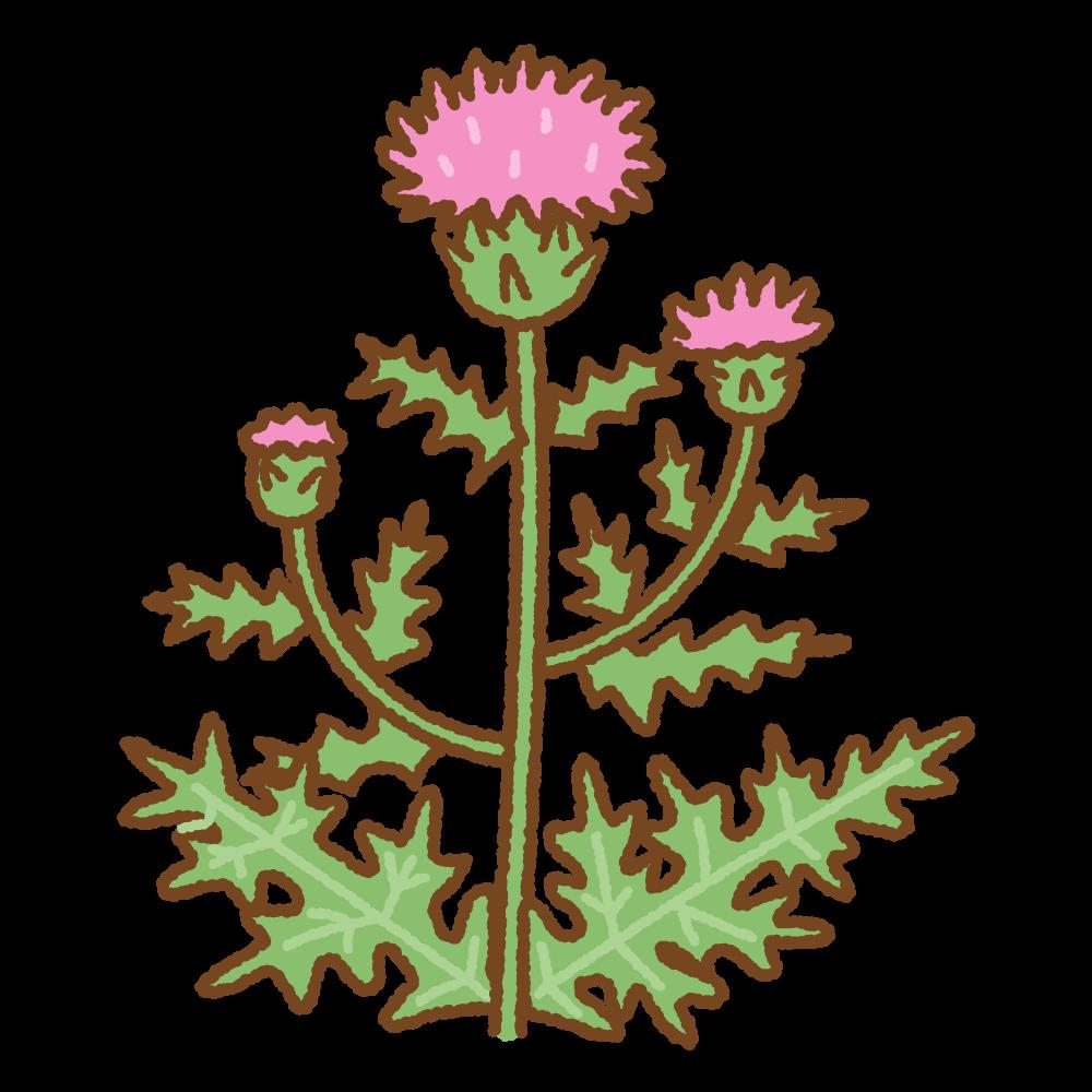 アザミのフリーイラスト Clip art of thistle