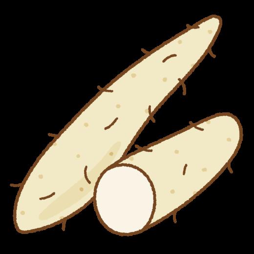 ヤマイモのイラスト