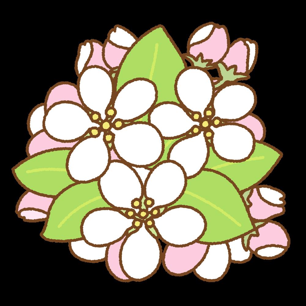 リンゴの花のフリーイラスト Clip art of apple flower