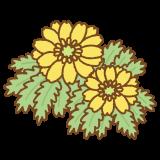 福寿草のイラスト