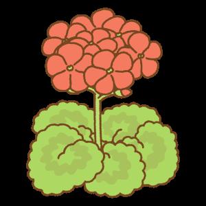 ゼラニウムのフリーイラスト Clip art of red geranium