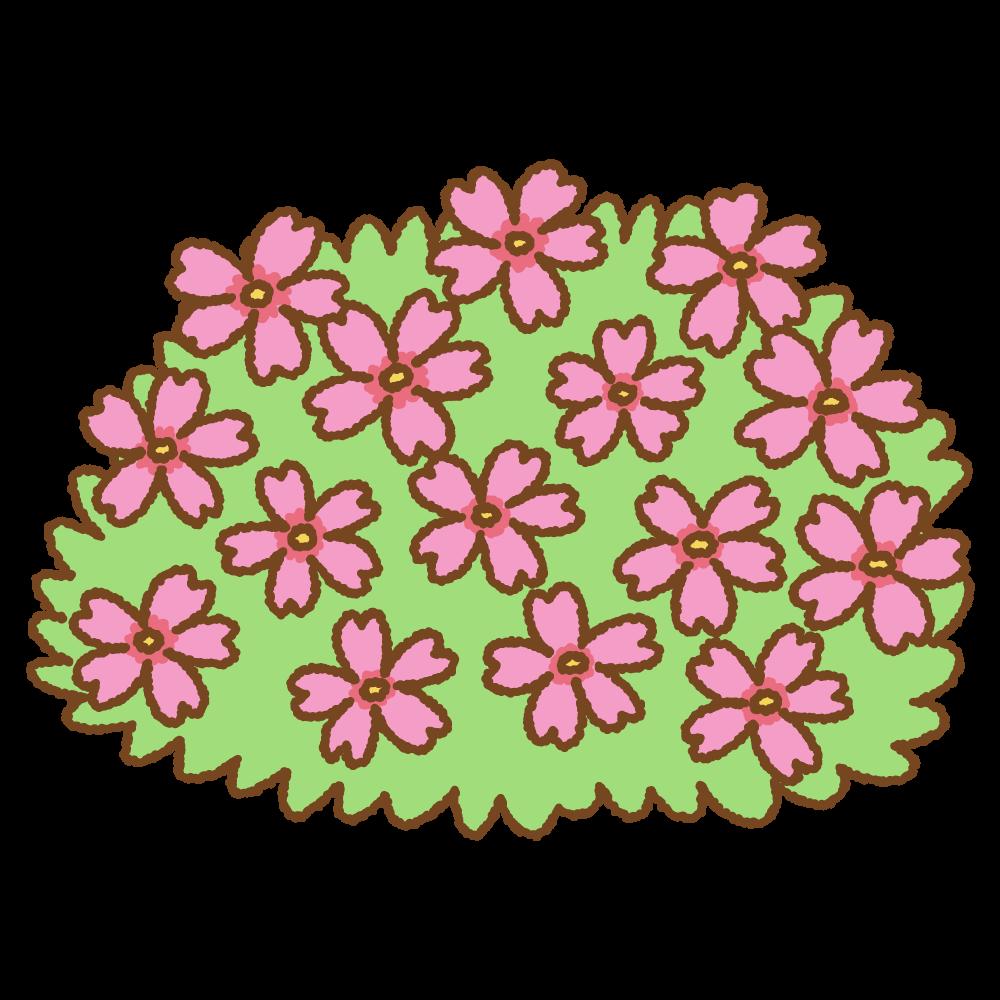 シバザクラのフリーイラスト Clip art of moss phlox